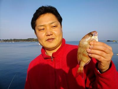 西伊豆・戸田港でチャリコを釣るオダ マルソウダ