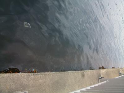 杉田臨海緑地は赤潮発生中