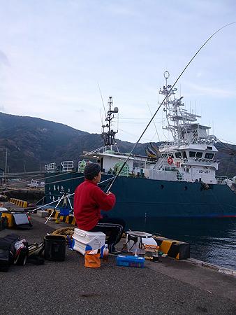 西伊豆・戸田港で竿を立てるオダ マルソウダ