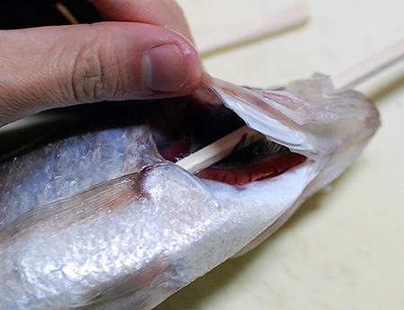 ワキヤハタのエラを抑えるようにして箸先を腹の中に入れ込む