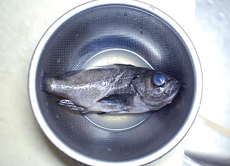 メバルを酢洗いする
