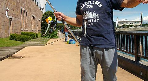 アイクル横護岸で釣ったカタクチイワシ、サビキ仕掛けにパーフェクト