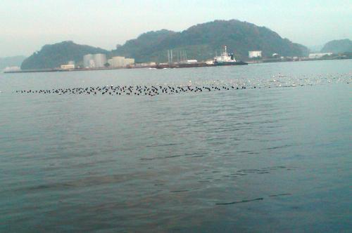 横須賀追浜のアイクル横護岸