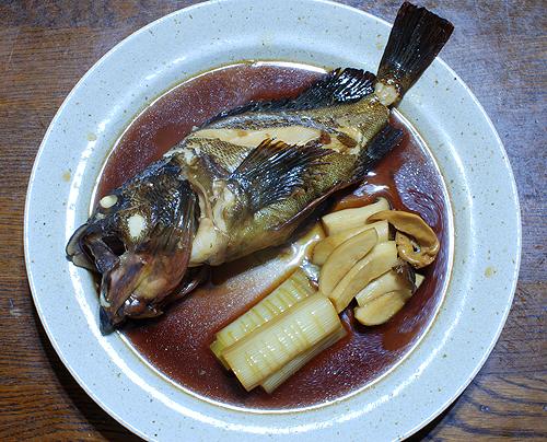 釣りカサゴの煮付け