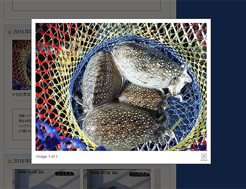 2016年3月29日、大黒海づり施設で釣られたシリヤケイカ