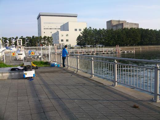 2016年4月9日の横浜磯子・杉田臨海緑地
