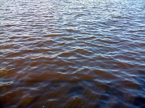 赤潮に染まる杉田臨海緑地